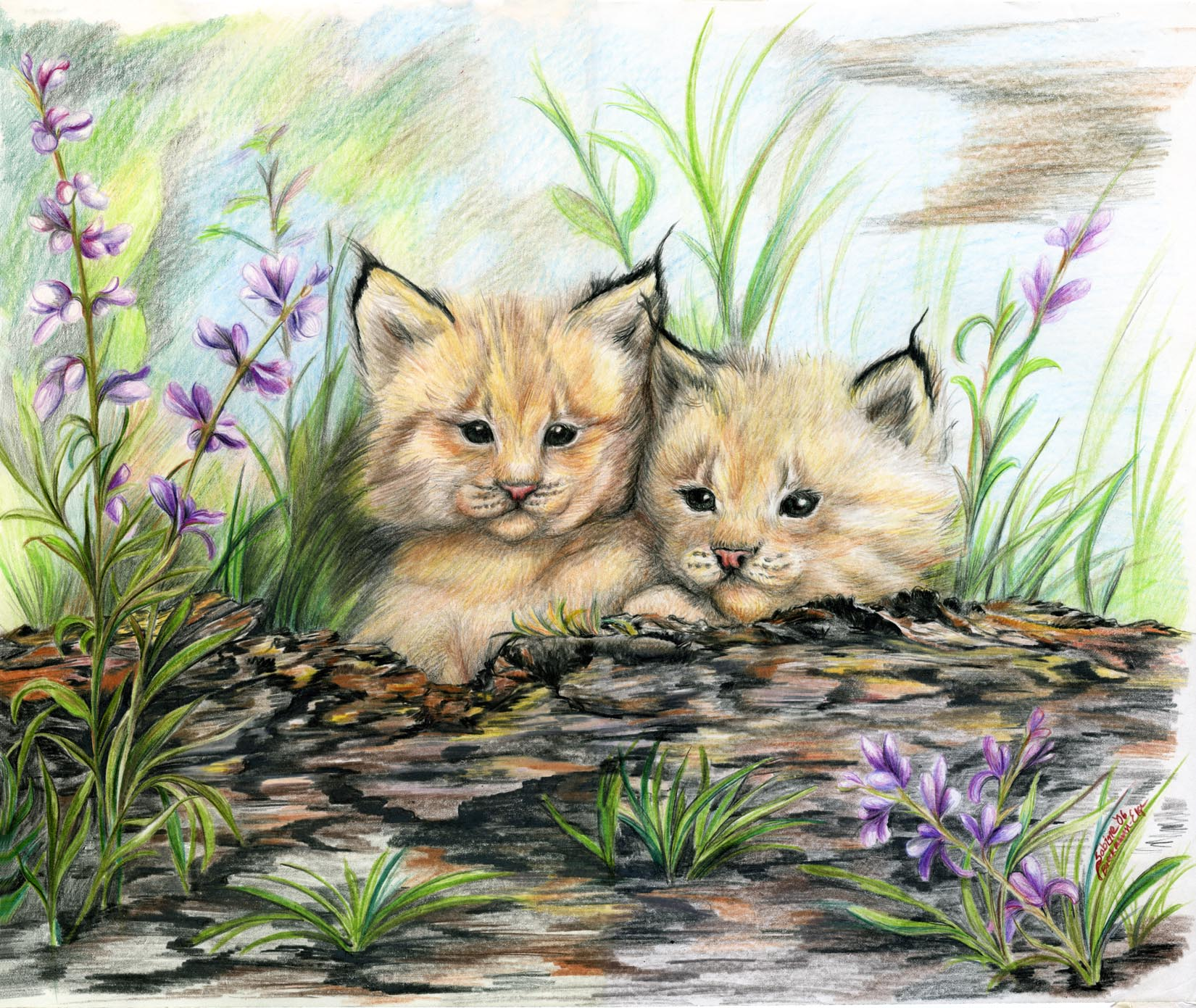 Linx Kittens, original colored pencil