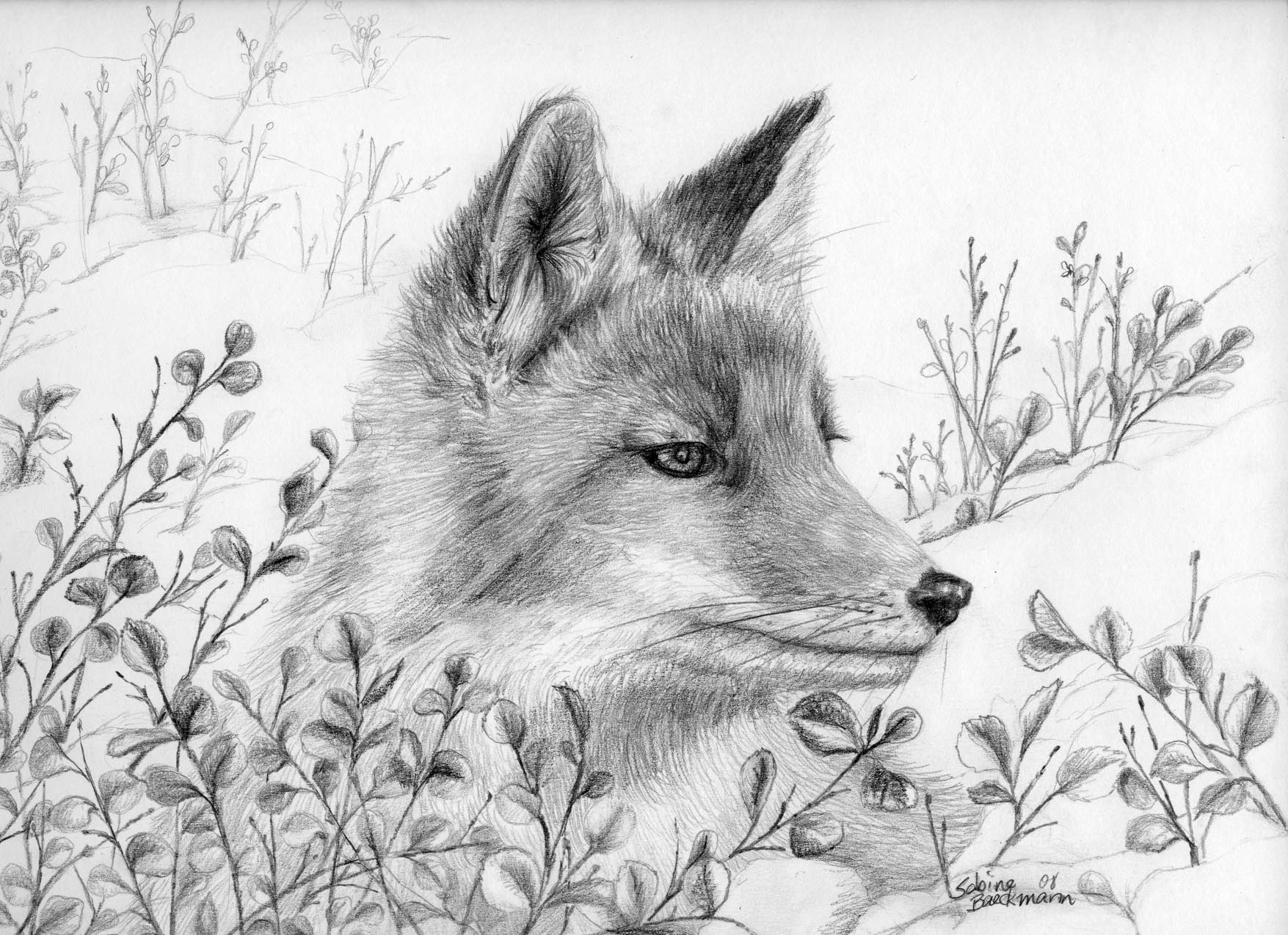 Winter Fox, original pencil